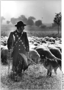 Schäfer mit Hund und Herde