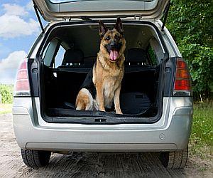 Schäferhund im Auto