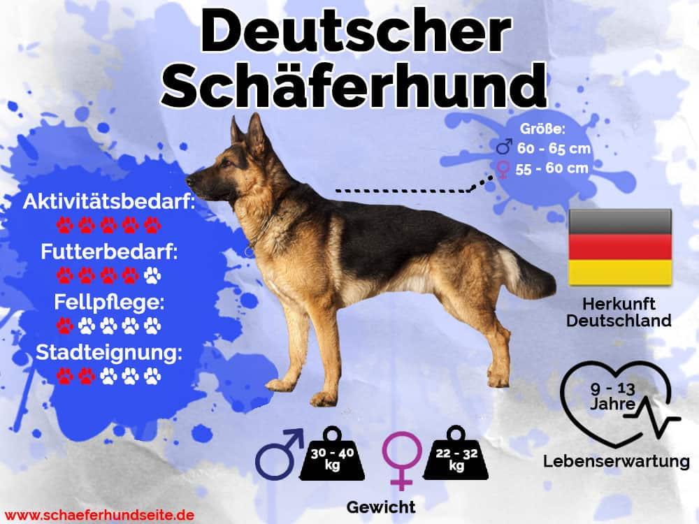 Schäferhund Infografik