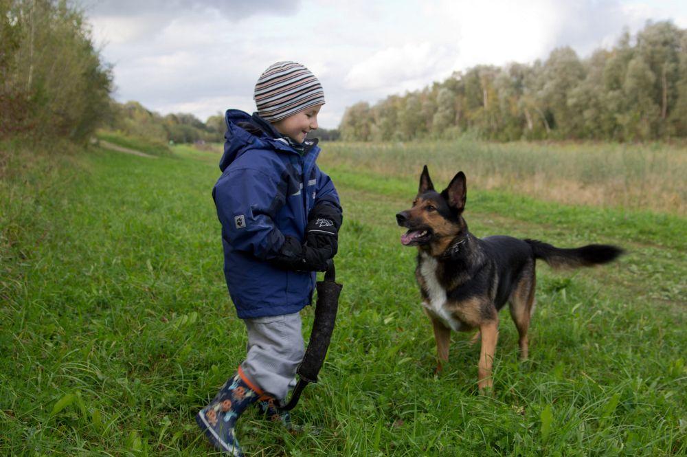 Schäferhund leben Familie