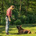 Tipps für die Schäferhund Erziehung