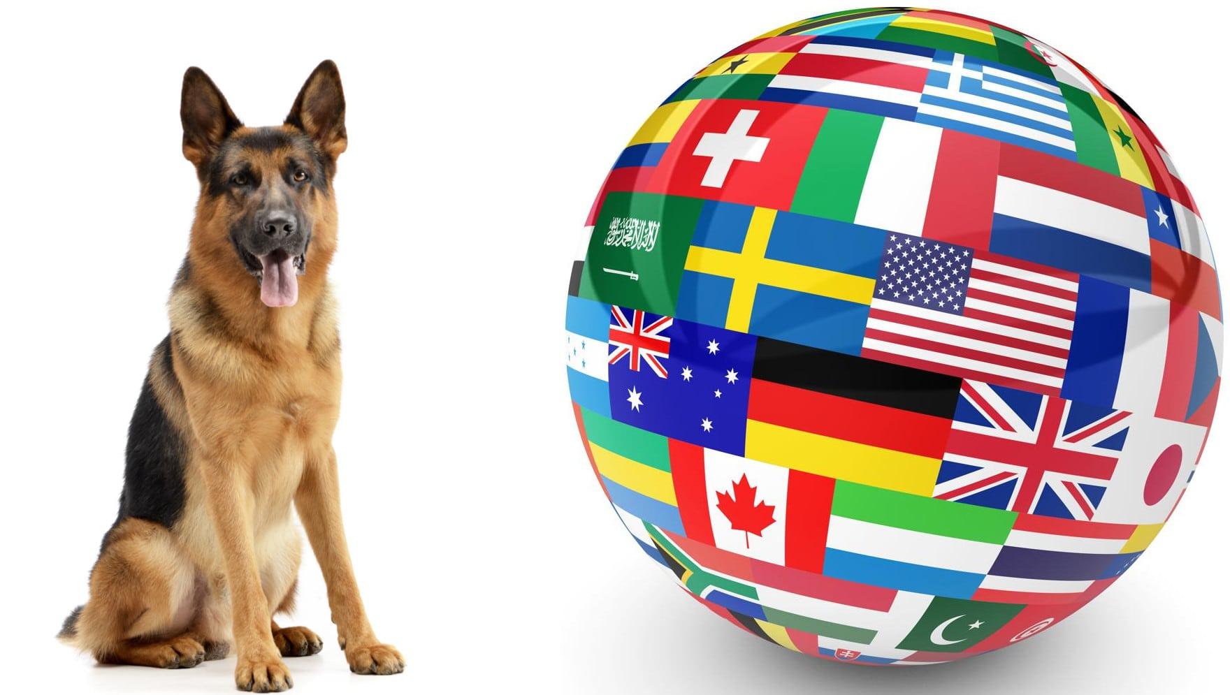 Schäferhund-Webseiten auf der ganzen Welt