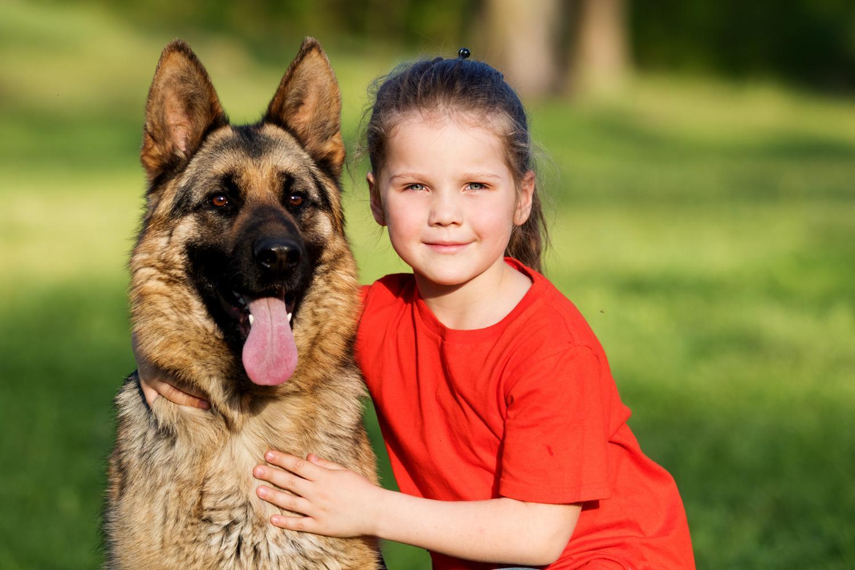 Ist der Schäferhund für Kinder geeignet? Ja, aber es müssen einige Regeln beachtet werden.