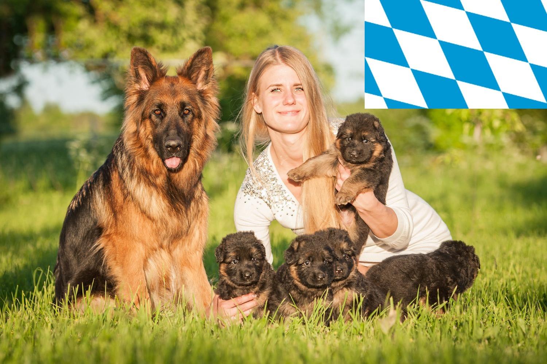 Schäferhund Züchter und Welpen in Bayern
